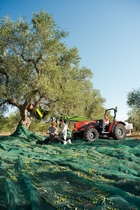 [SAME] trattore Explorer 3 TB al lavoro con scuotitore pneumatico per la raccolta delle olive