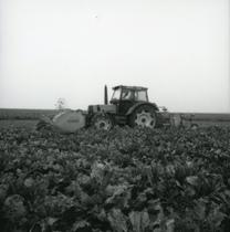 [Deutz-Fahr] trattore DX 4.70 al lavoro in un campo di barbabietole