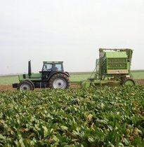 [Deutz-Fahr] DX 6.10 Einsatz - mit Zuckerrübenvollernter = DX 6.10 al lavoro durante la raccolta della barbabietola da zucchero