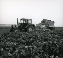 [Deutz-Fahr] trattore DX 4.50 al lavoro in un campo di barbabietole
