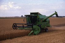 [Deutz-Fahr] mietitrebbia M 35.80 al lavoro in un campo di grano