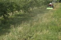 [SAME] trattore Solaris 50 al lavoro con barra falciante