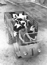 Samecar agricolo - Trasporto animali