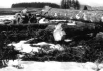 Trattore Deutz D 40.1 S durante i lavori forestali