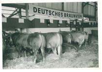Fiera di Francoforte - Deutsche Landwirtschafts Gesellschaft