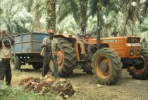 [SAME] trattore Corsaro 70 in una piantagione di palme da olio