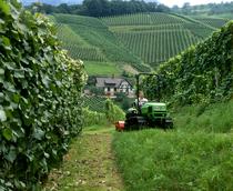 [Deutz-Fahr] trattore Agroclimber al lavoro tra i filari in collina