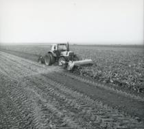 [Deutz-Fahr] trattore DX 6.50 al lavoro in un campo di barbabietole