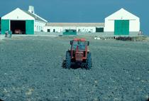 [SAME] trattore Delfino 35 al lavoro con ripuntatore e trattore Buffalo 130 al lavoro con erpice