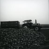 [Deutz-Fahr] trattore DX 6.30 al lavoro in un campo di barbabietole