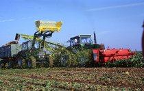[Deutz-Fahr] trattore DX 6.50 al lavoro durante la raccolta delle barbabietole
