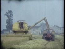 Ciclo colturale del riso