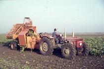 [SAME] Trattori SAME sui polders in Olanda - da Cebeco, 30/7/68