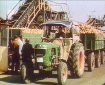 [Deutz] trattore Deutz D 40.1 S al lavoro con rimorchio
