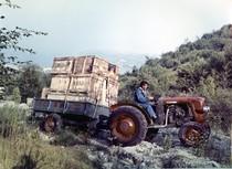 [SAME] trattore SAME 240 con rimorchio nei pressi di Salò