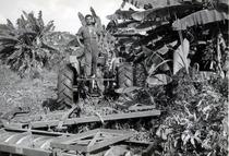 Trattorie SAME Ariete presso importatore Venezuela - Prove nella piantagione con erpice a dischi
